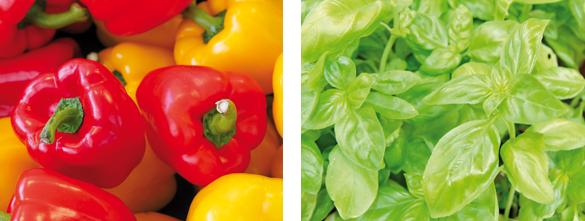 Vortrag Echter Gemüse