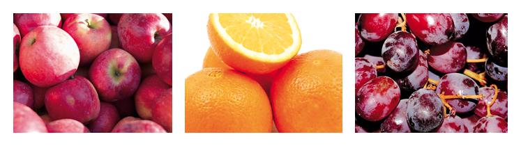 Vortrag Echter Obst